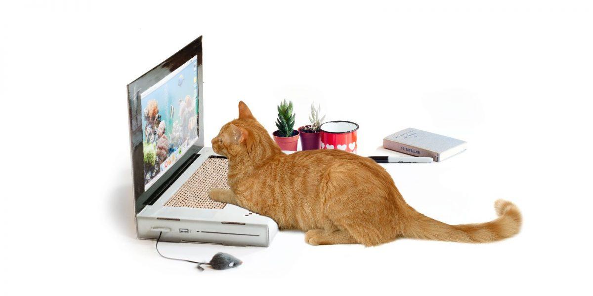 Cat Scratch Laptop
