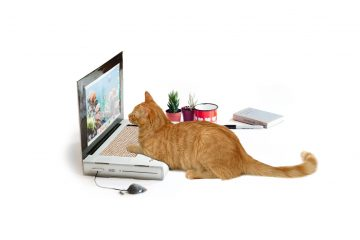 cat-scratch-laptop