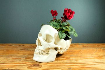 Skull with roses in it